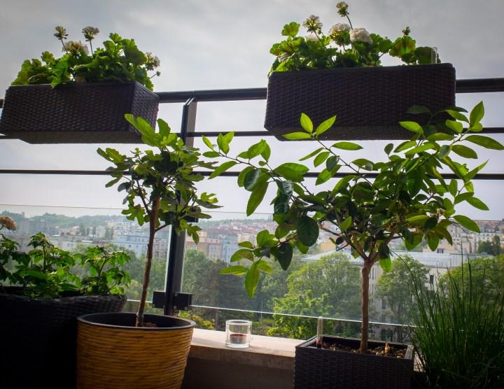 Jak rozjet jedlý balkon v 5 krocích.