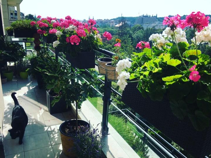5 nejčastějších důvodů, proč se květinám u vás doma nedaří
