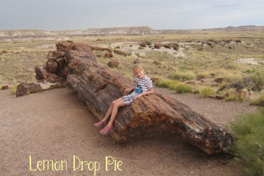 petrified log