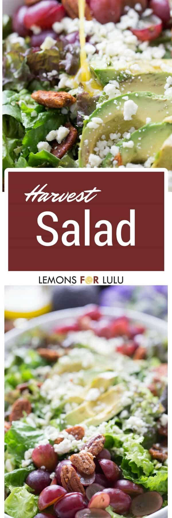 Every good meal begins with a good salad! This Harvest salad has everyday ingredients tossed together in the most elegant way!