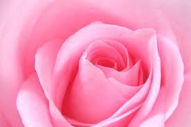 rosewater5