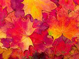 Is It 'Autumn' or 'Fall'? | Merriam-Webster