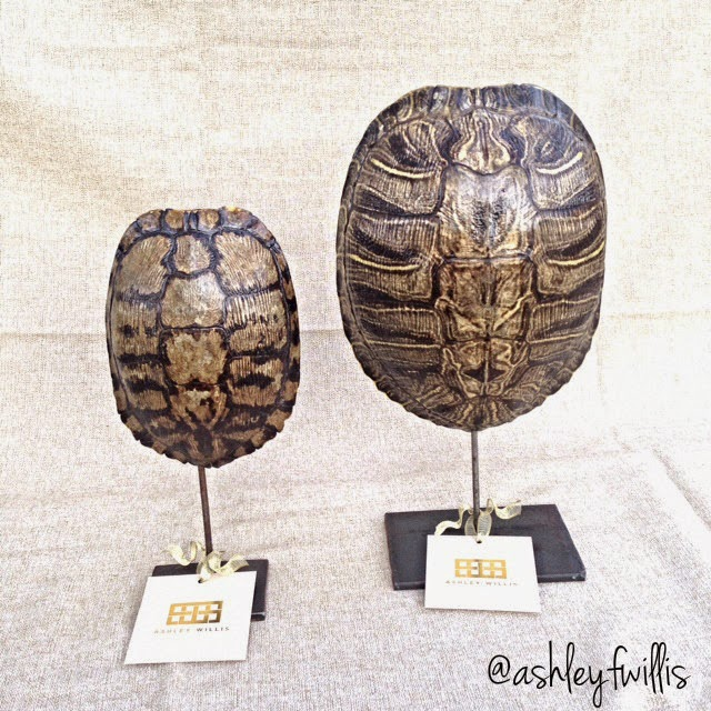 Attractive Decorative Turtle Shells Handcrafted in Texas – Lemons to Lovelys OH47