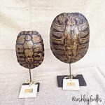 Decorative Turtle Shells Handcrafted in Texas