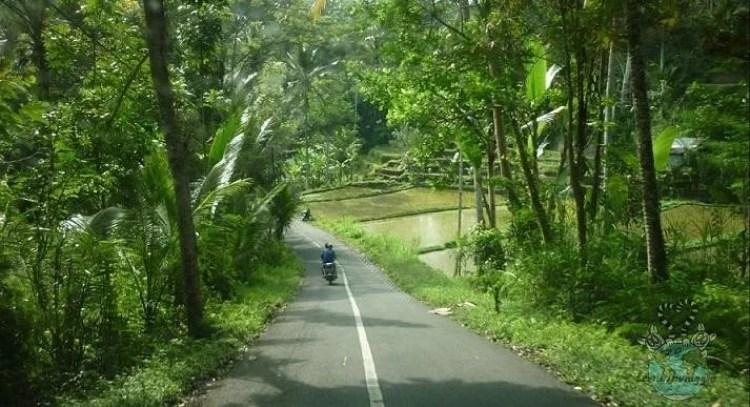 Strade strette ma con viste bellissime sulle risaie di Bali