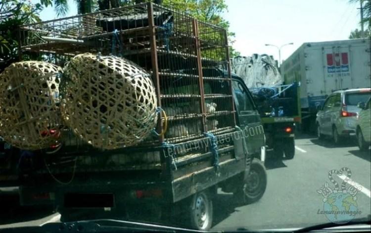 Tagliare la strada a Bali è normale