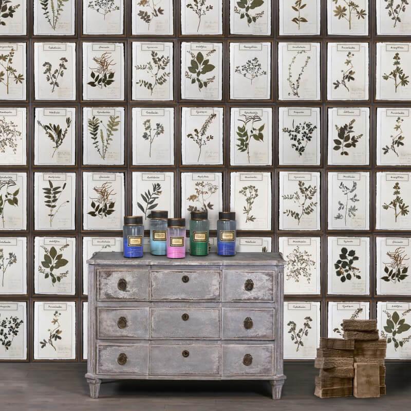 quadri-erbario-arredo-parete