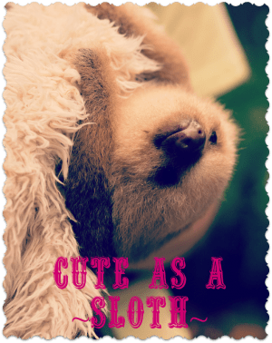 cute-sloth-award04