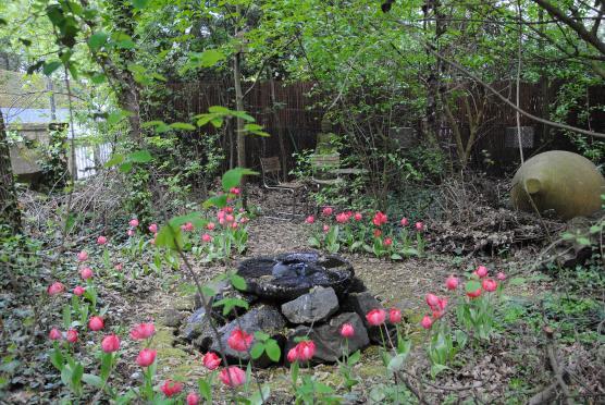 Der Frühling ist da! Und mit ihm auch eine prachtvolle Ansammlung rosaroter Tulpen, die sich um das Wasserspiel tümmeln.