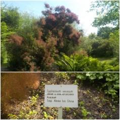 16-botanischergarten-tropen-araceae-gruenerbeton