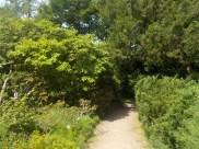 2-botanischergarten-weg-gruenerbeton