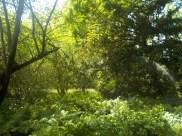 3-botanischergarten-lichtung-gruenerbeton
