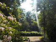 6-botanischergarten-sonnenstrahlen-gruenerbeton