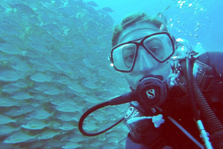 School Of Fish Divemaster