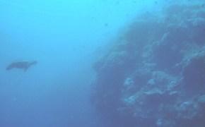 Dive Guide_Panglao