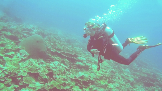 Ultimate Guide To Budget Diving
