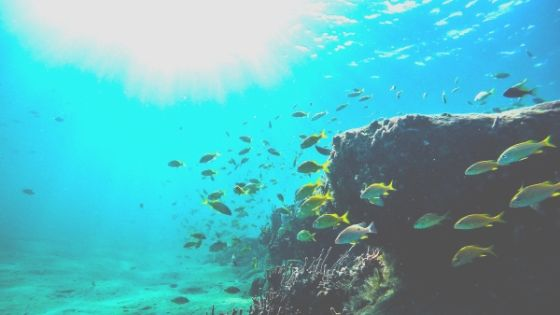 Cheap Dive Destinations