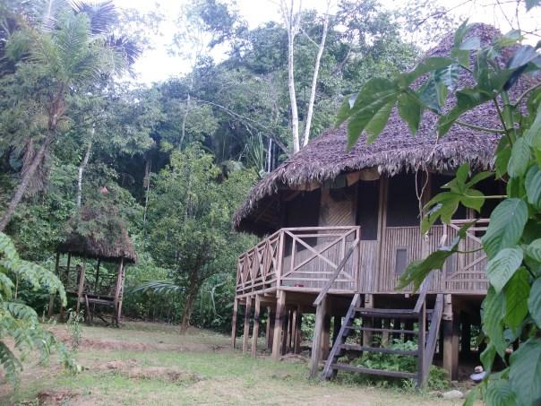 ayahuasca lenaventures