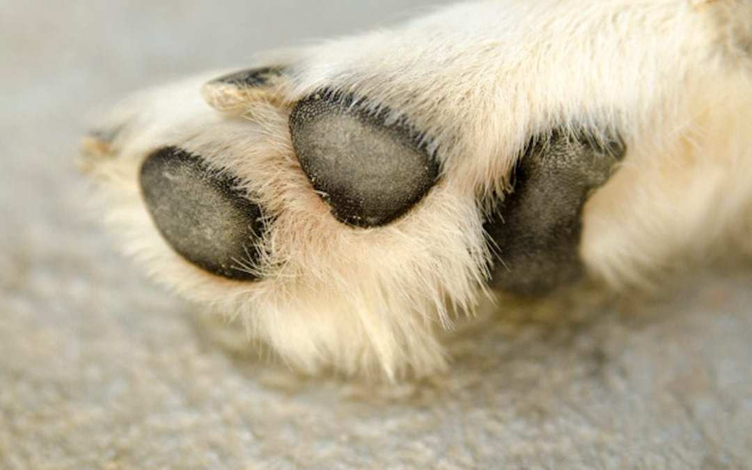 How to look after your dog's paw pads in summer