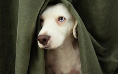 Perros con miedo a truenos, petardos y cohetes