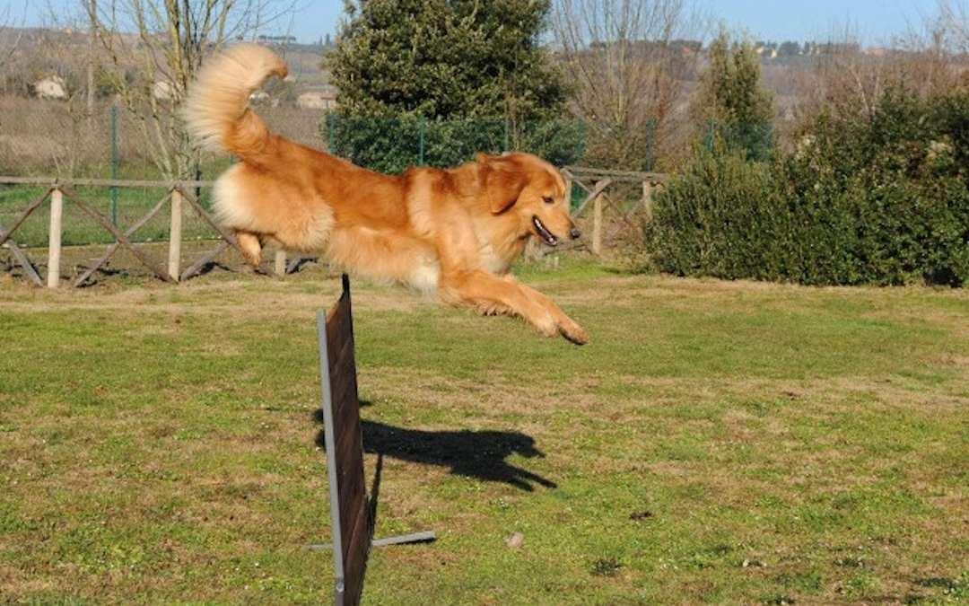 perro competición