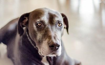 ¿Sufren artrosis los perros? El veterinario José David García resuelve nuestras dudas.