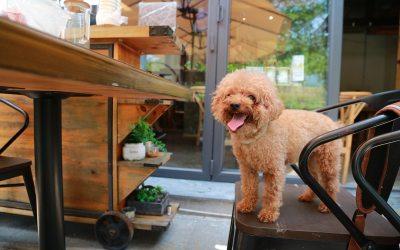 5 errores en la alimentación de tu mascota