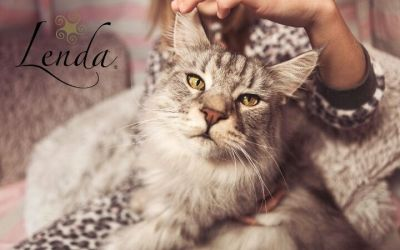 Tips to overcome ailurophobia: fear of cats