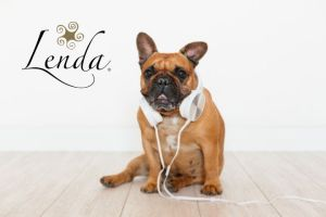 ¡A tu mascota también le gusta la música!