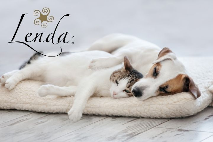 Does your pet dream?