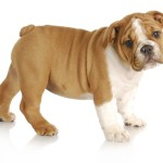 Pet peeve – there is a lot of talk about pets in Robyn's family this week