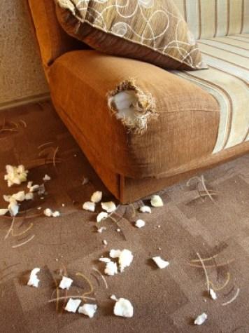 http://www.dreamstime.com/stock-photos-damaged-sofa-2-image17300643
