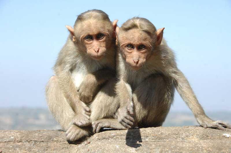 Cheeky-monkeys