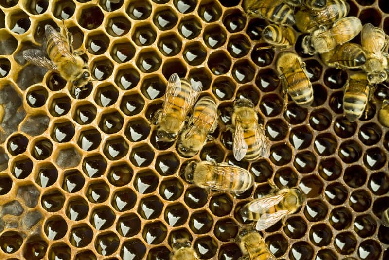 Bees in Switzerland