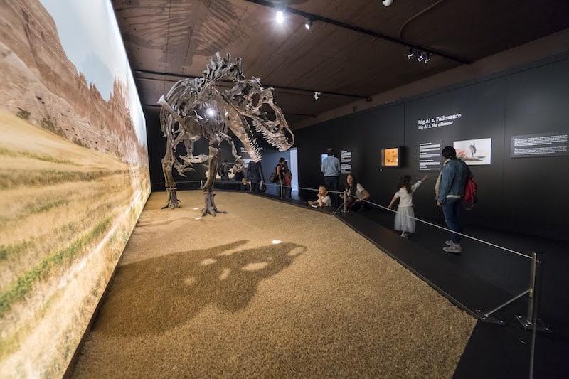 Photo: Philippe Wagneur / Muséum Genève