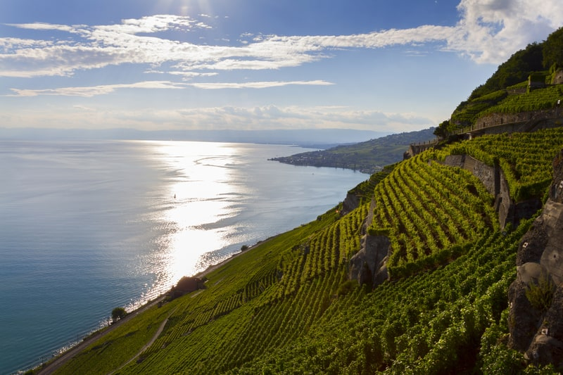 Lavaux between Vevey and Lausanne - © Osorioartist | Dreamstime.com