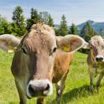 Swiss fact: Switzerland first country to consider dignity of animals in constitution