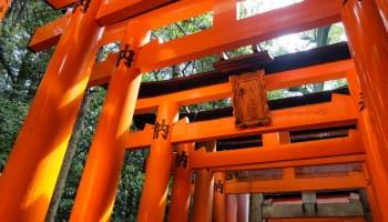 Through thousands of torii in Fushimi Inari