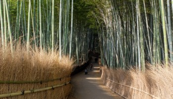 Morning at Arashiyama Bamboo Groves
