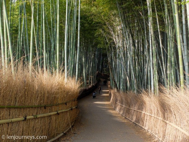 Morning at Arashiyama Bamboo Groves