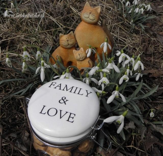 family, love, dóza, mačky, snežienky