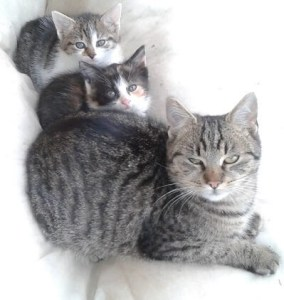 lojzo, kocúr, mačiatka
