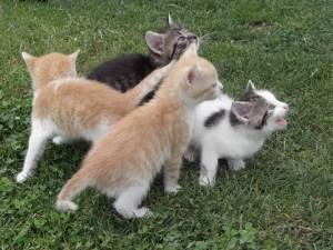 mačiatka, chceme, jesť