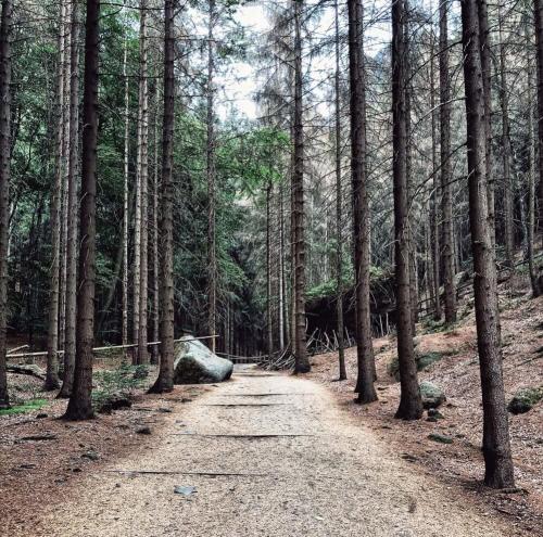 České Švajčiarsko, České Švýcarsko, cesta na Pravčickú bránu, les