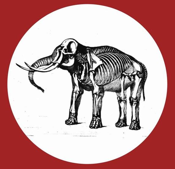 Elephant Sessions en tournée en France - Lenn Live - Booking France