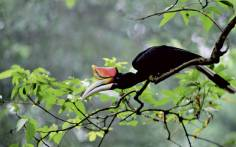 wildlife-of-borneo-21745329-1384274032-ImageGalleryLightbox