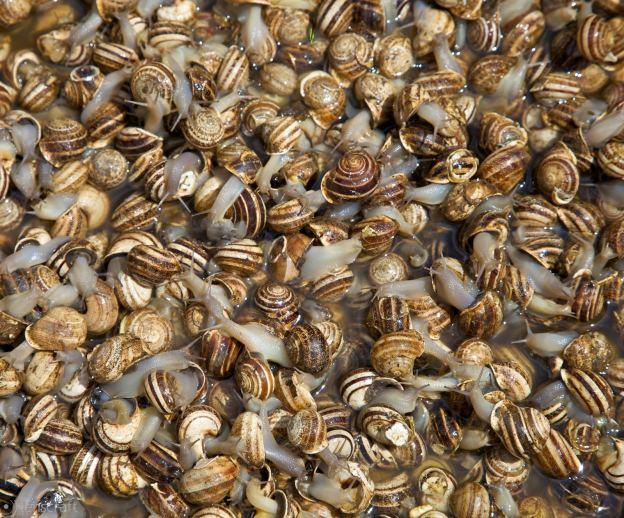 snails / fés, morocco