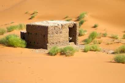 dog of the sahara / erg chebi, morocco