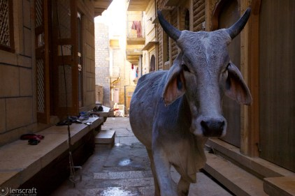 alley encounter / jaisalmer, india
