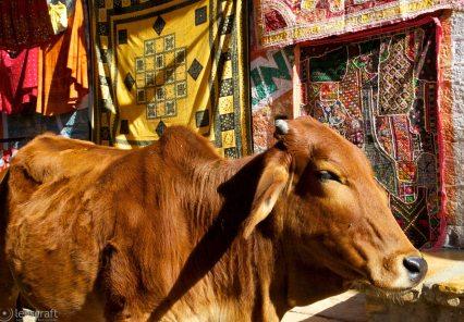 shopping for rugs / jaisalmer, india
